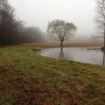 Pond Berms